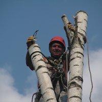 спиливание деревьев -арбористика